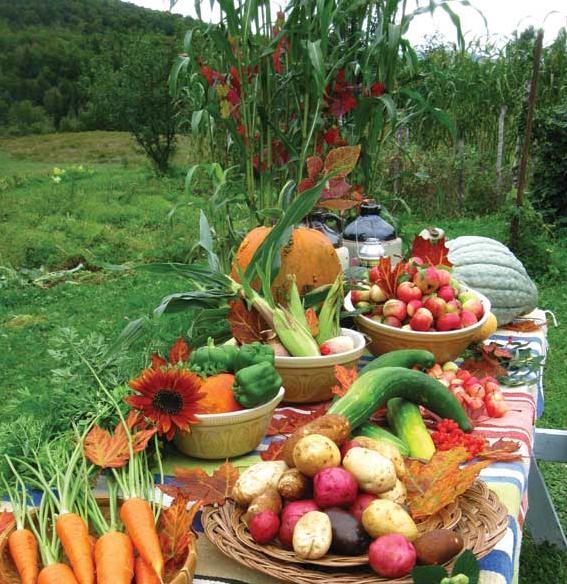 Organic Farming Bounty