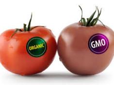 GMO Produce