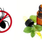 How To Naturally Repel Spiders