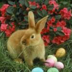 Easter Bunny & Easter Egg Alert