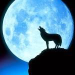 A Message To All Werewolves & Werewolf Lovers