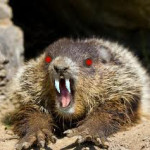 Demonic Vampire Ground Hog Warning