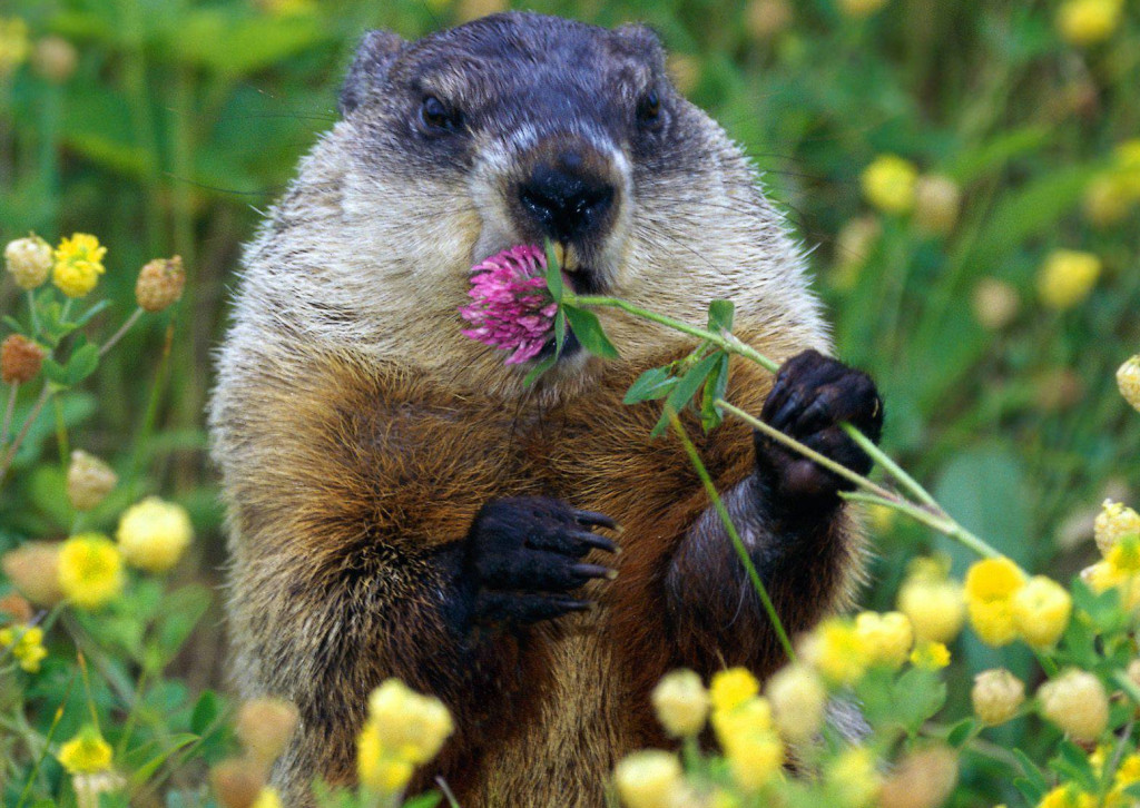 The Supernatural Story Of Groundhog Day