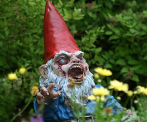 Crazed Gnome