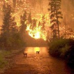 Forest Fire Of Hell