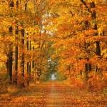 Amazing Autumn Annotations