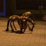 The Spine Chilling Spider-Canine Hybrid