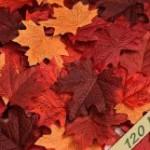 How To Make A Beautiful Fall Folliage Bowl
