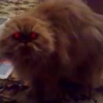 Demonic Cat With Illuminated Crimson Eyes!