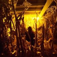 Malevolent Corn Maze