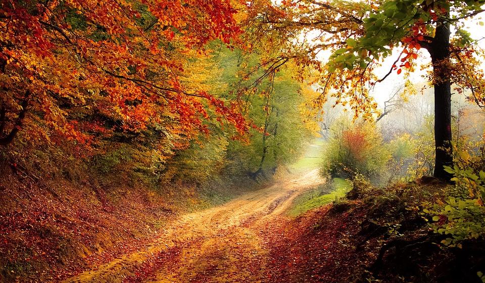 Fleeting Fall