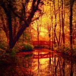 Autumn Forest Pond