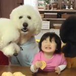 A Toddler Shares Her Snacks With Three Dogs