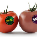 Mattress Labeling Yes!  GMO Food Labeling No!