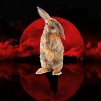 Blood-Tetrad-Moon-Werewolf-Bunny