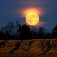 Harvest Werewolf Moon