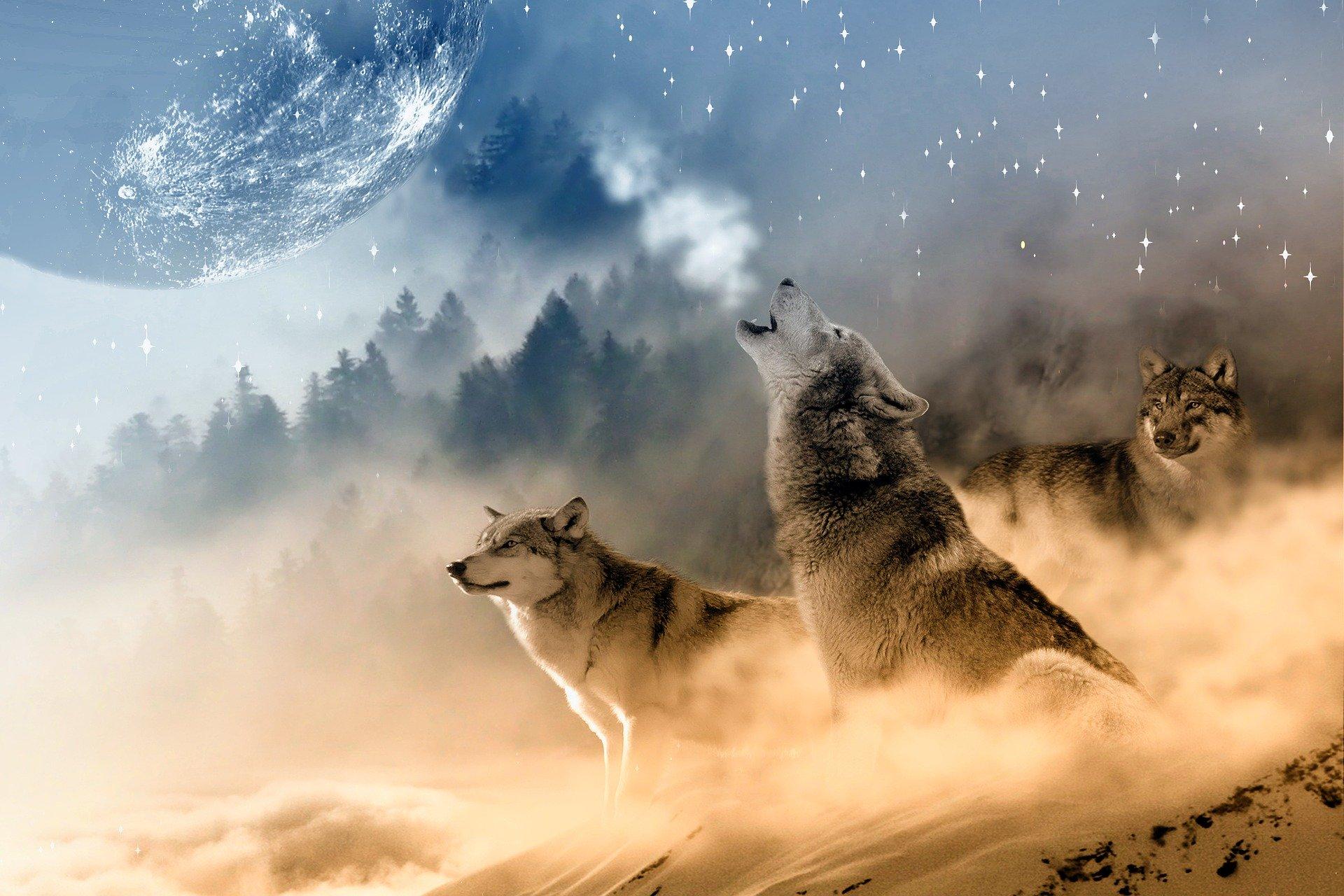 Penumbral Eclipse Wolf Moon Werewolf Watch