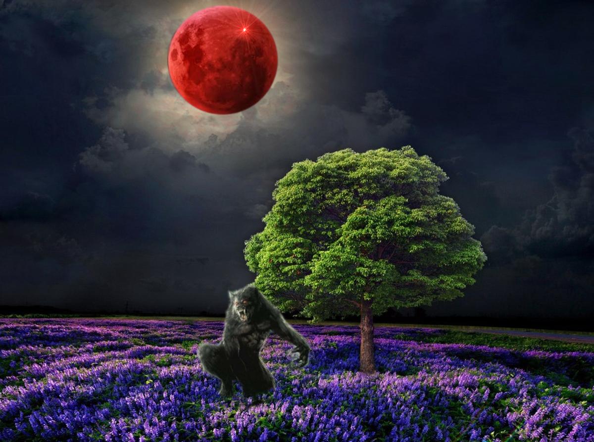 Super Blood Flower Moon Werewolf Warning