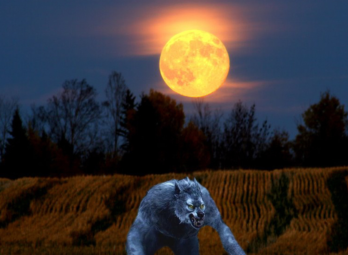 Hallowed Autumn Harvest Moon Werewolf Warning