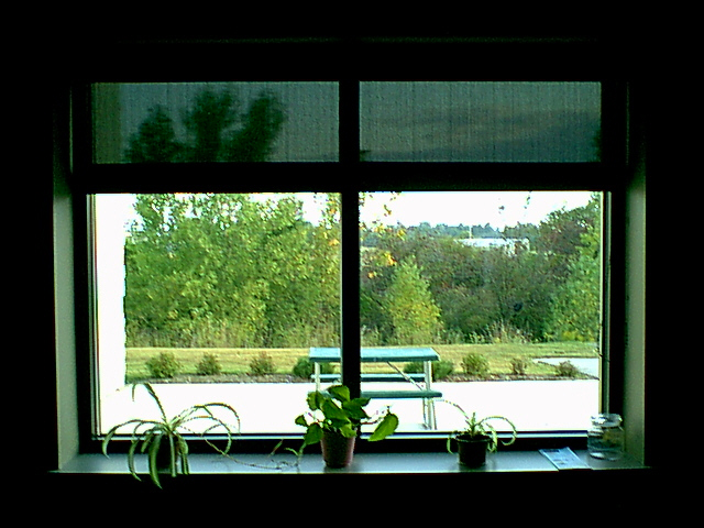 Cafeteria Window