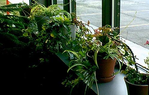 Rebecca's Plants